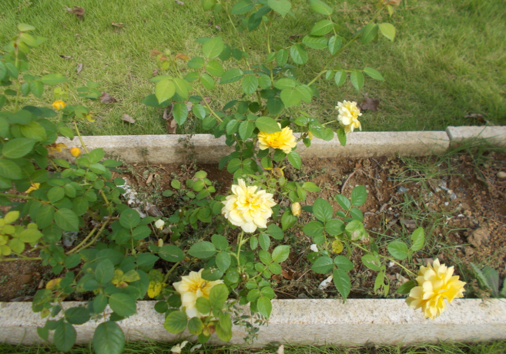 季節のお花を紹介します